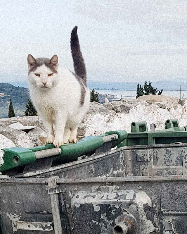 greece stray cats