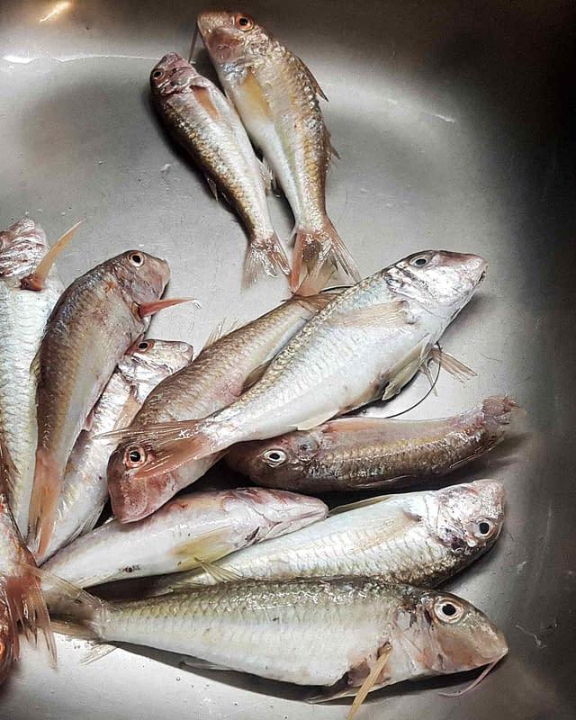 mix fresh fish
