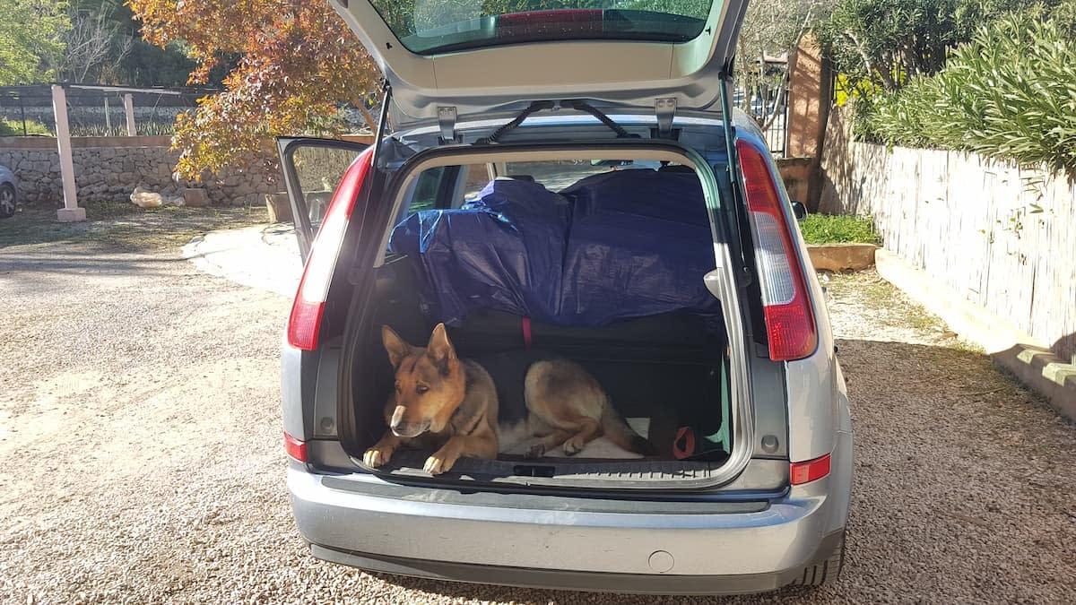 german shepherd travelling by car