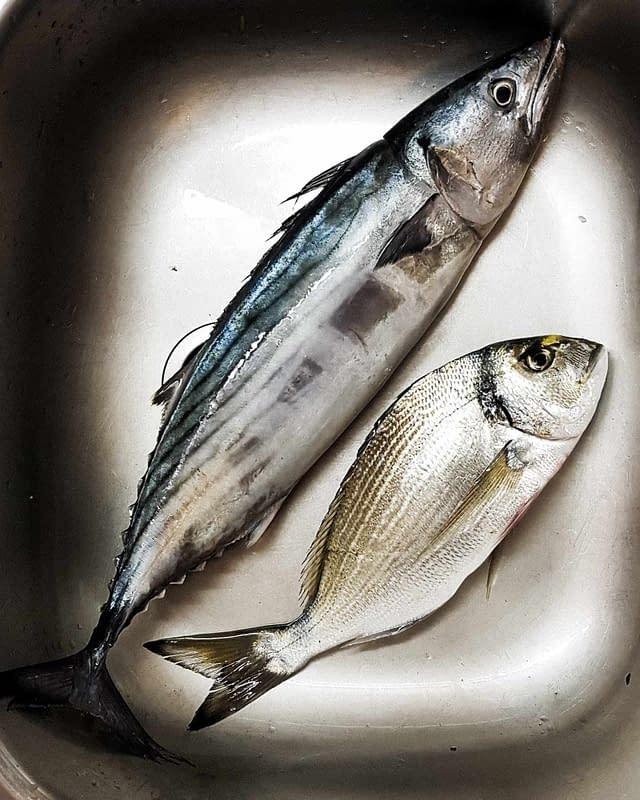 fresh fish greece