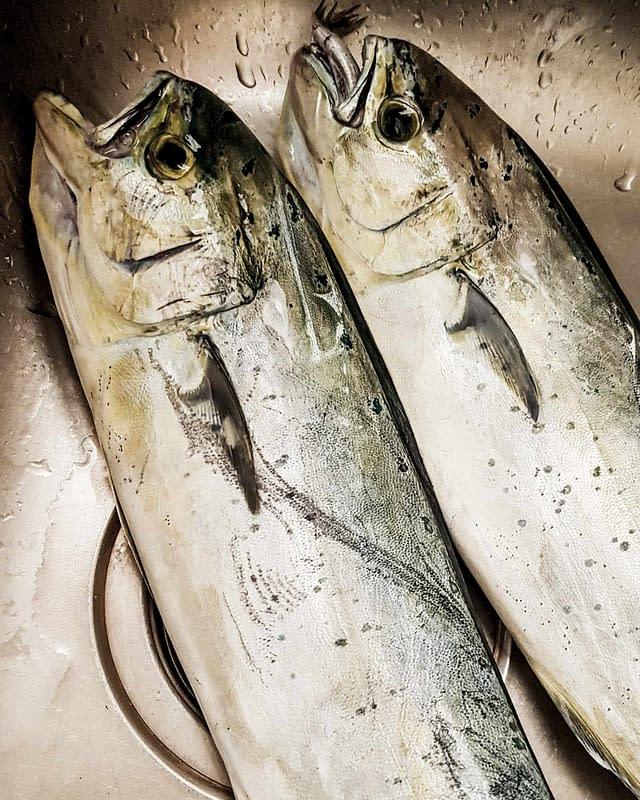 fresh mahi mahi dolphin fish greece
